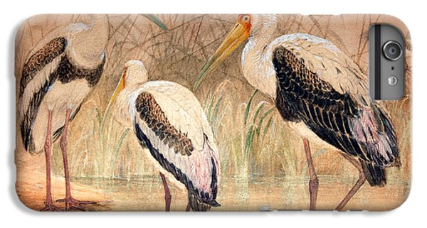 African Tantalus Pseudotantalus Ibis IPhone 7 Plus Case