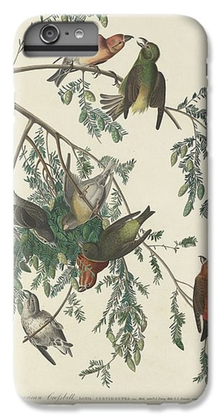 Crossbill iPhone 7 Plus Case - American Crossbill by Dreyer Wildlife Print Collections