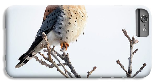American Kestrel At Bender IPhone 7 Plus Case