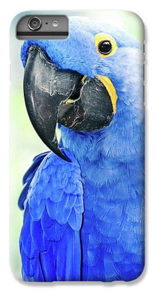 Macaw iPhone 7 Plus Case - Beauty Is An Enchanted Soul by Sharon Mau