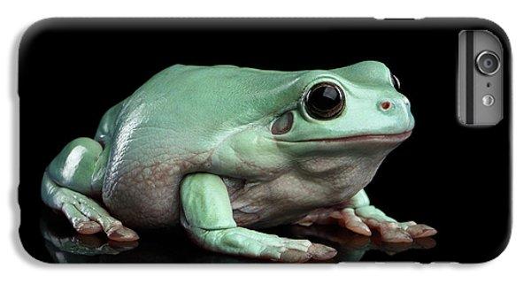 Australian Green Tree Frog, Or Litoria Caerulea Isolated Black Background IPhone 7 Plus Case by Sergey Taran