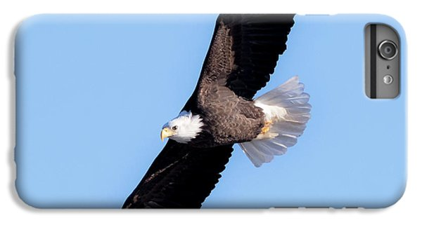 Bald Eagle Overhead  IPhone 7 Plus Case