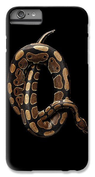 Ball Or Royal Python Snake On Isolated Black Background IPhone 7 Plus Case by Sergey Taran