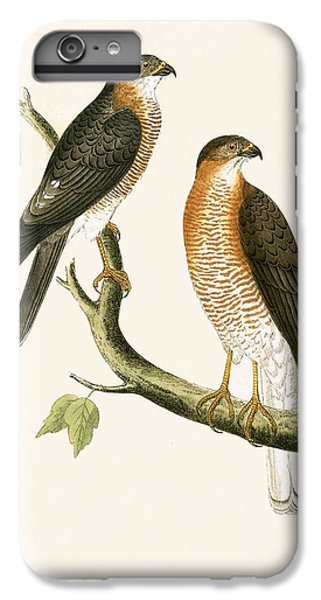Calcutta Sparrow Hawk IPhone 7 Plus Case by English School