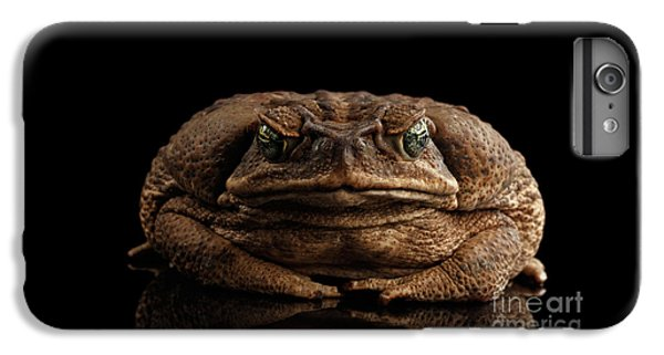 Cane Toad - Bufo Marinus, Giant Neotropical Or Marine Toad Isolated On Black Background, Front View IPhone 7 Plus Case