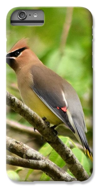 Cedar Waxing iPhone 7 Plus Case - Cedar Wax Wing 1 by Sheri McLeroy