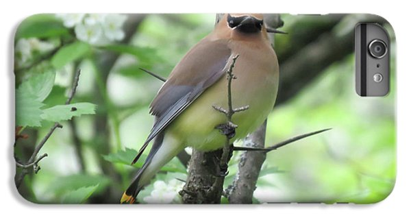 Cedar Waxing iPhone 7 Plus Case - Cedar Wax Wing by Alison Gimpel