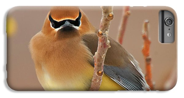Cedar Wax Wing IPhone 7 Plus Case by Carl Shaw