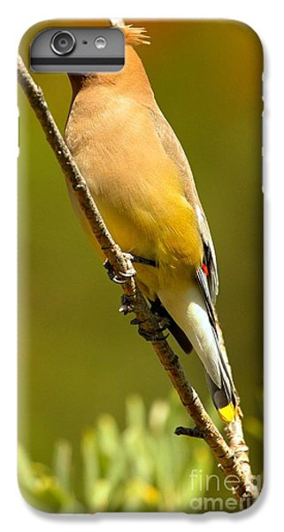Cedar Waxing iPhone 7 Plus Case - Cedar Waxwing by Adam Jewell