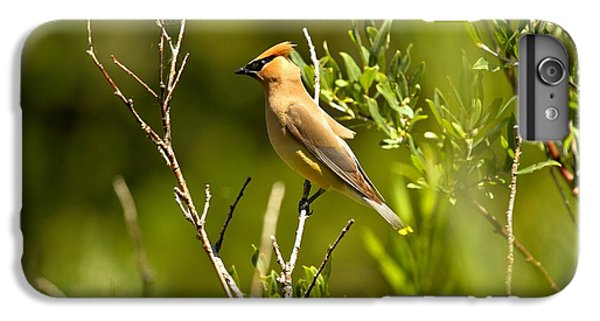 Cedar Waxing iPhone 7 Plus Case - Cedar Waxwing At Glacier by Adam Jewell