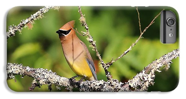 Cedar Waxing iPhone 7 Plus Case - Cedar Waxwing  by Carol R Montoya