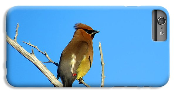 Cedar Waxwing IPhone 7 Plus Case by Dianne Cowen
