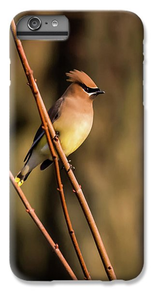 Cedar Waxing iPhone 7 Plus Case - Cedar Waxwing On Branch by Terry DeLuco