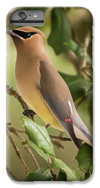 Cedar Waxing iPhone 7 Plus Case - Cedar Waxwing Portrait by Terry DeLuco