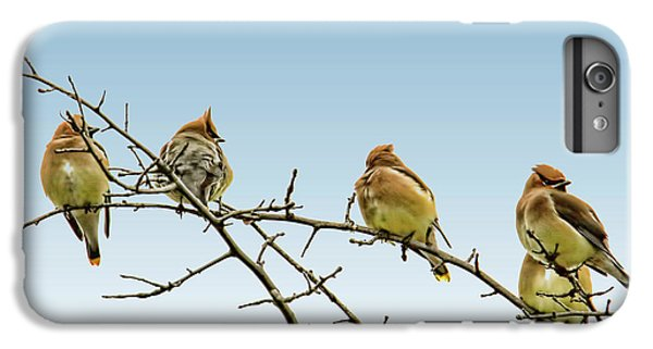 Cedar Waxing iPhone 7 Plus Case - Cedar Waxwings by Geraldine Scull