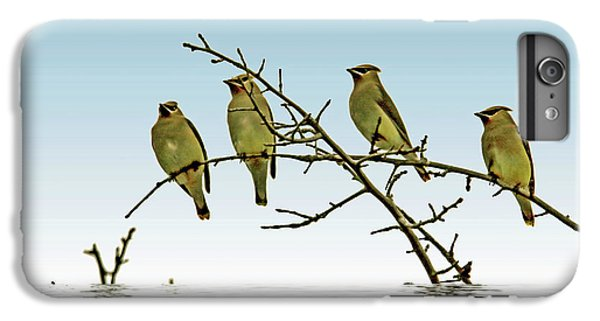 Cedar Waxing iPhone 7 Plus Case - Cedar Waxwings On A Branch by Geraldine Scull