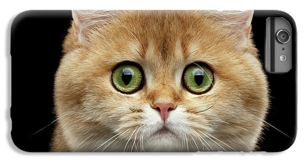 Cat iPhone 7 Plus Case - Close-up Portrait Of Golden British Cat With Green Eyes by Sergey Taran