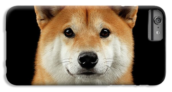 Close-up Portrait Of Head Shiba Inu Dog, Isolated Black Background IPhone 7 Plus Case by Sergey Taran