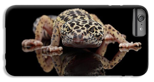 Closeup Leopard Gecko Eublepharis Macularius Isolated On Black Background, Front View IPhone 7 Plus Case by Sergey Taran
