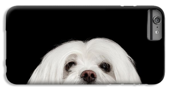 Closeup Nosey White Maltese Dog Looking In Camera Isolated On Black Background IPhone 7 Plus Case