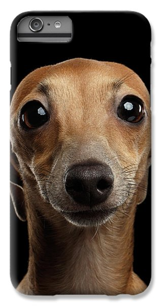 Dog iPhone 7 Plus Case - Closeup Portrait Italian Greyhound Dog Looking In Camera Isolated Black by Sergey Taran
