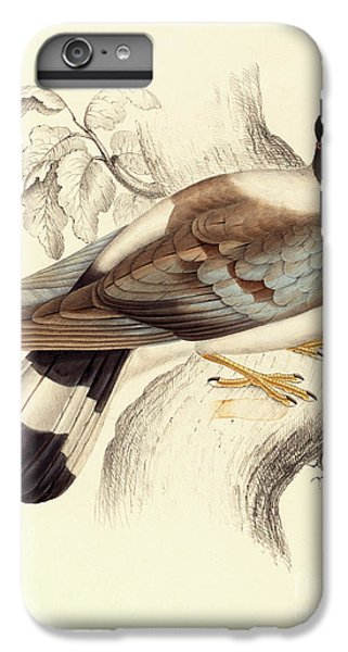 Columba Leuconota, Snow Pigeon IPhone 7 Plus Case by Elizabeth Gould