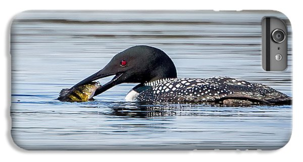 Common Loon Square IPhone 7 Plus Case by Bill Wakeley