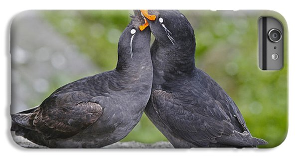 Auklets iPhone 7 Plus Case - Crested Auklet Pair by Desmond Dugan/FLPA