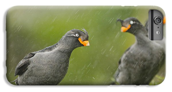 Auklets iPhone 7 Plus Case - Crested Auklets by Desmond Dugan/FLPA