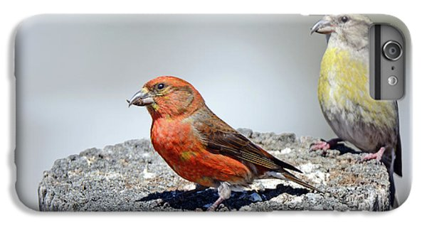 Crossbill iPhone 7 Plus Case - Crossbills by Brad Christensen