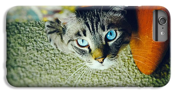 IPhone 7 Plus Case featuring the photograph Curious Kitty by Silvia Ganora