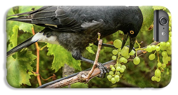 Currawong On A Vine IPhone 7 Plus Case