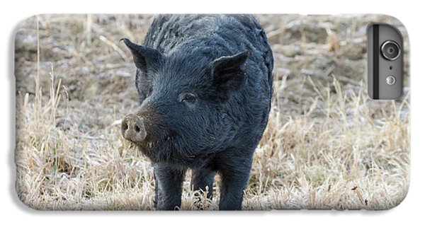 IPhone 7 Plus Case featuring the photograph Cute Black Pig by James BO Insogna