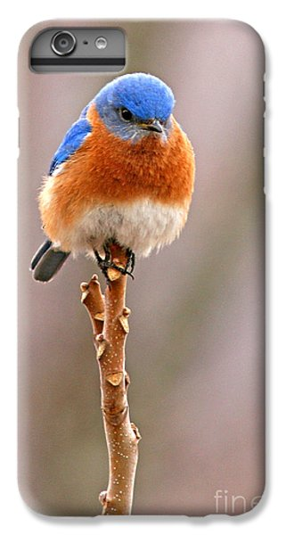 Bluebird iPhone 7 Plus Case - Eastern Bluebird Treetop Perch by Max Allen