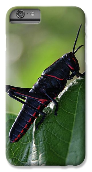 Eastern Lubber Grasshopper IPhone 7 Plus Case by Richard Rizzo