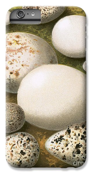 Sandpiper iPhone 7 Plus Case - Eggs by English School