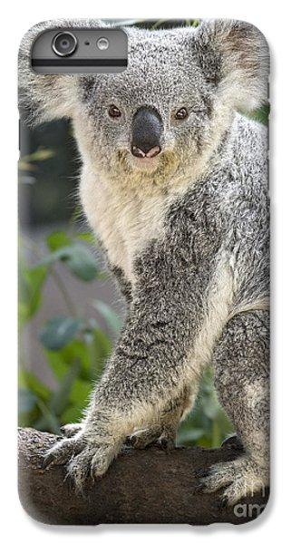 Female Koala IPhone 7 Plus Case