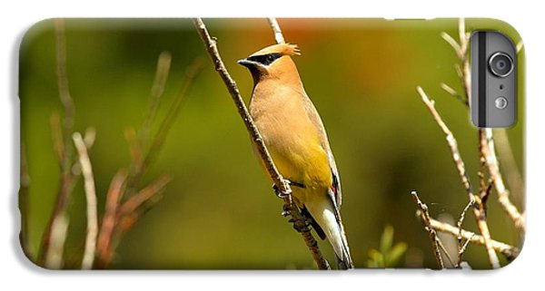 Fishercap Cedar Waxwing IPhone 7 Plus Case by Adam Jewell