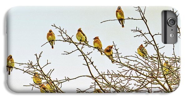 Cedar Waxing iPhone 7 Plus Case - Flock Of Cedar Waxwings  by Geraldine Scull