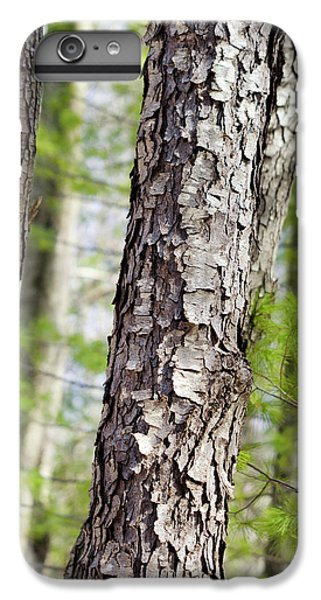IPhone 7 Plus Case featuring the photograph Forest Trees by Christina Rollo