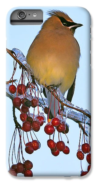 Cedar Waxing iPhone 7 Plus Case - Frozen Dinner  by Tony Beck