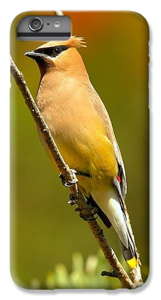 Cedar Waxing iPhone 7 Plus Case - Glacier Cedar Waxwing by Adam Jewell