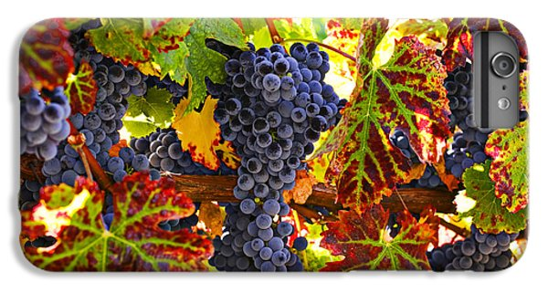 Wine iPhone 7 Plus Case - Grapes On Vine In Vineyards by Garry Gay
