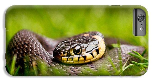 Grass Snake - Natrix Natrix IPhone 7 Plus Case
