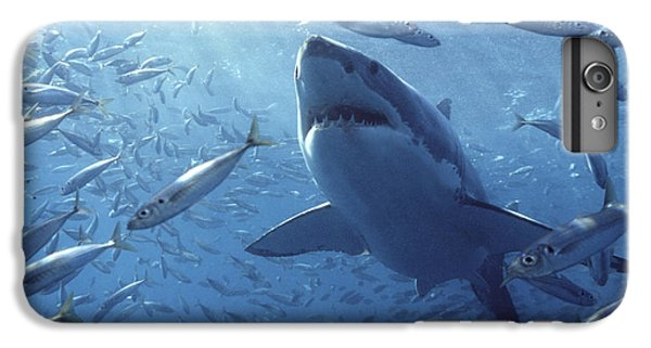 Mango iPhone 7 Plus Case - Great White Shark Carcharodon by Mike Parry