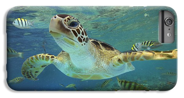 Green Sea Turtle Chelonia Mydas IPhone 7 Plus Case by Tim Fitzharris