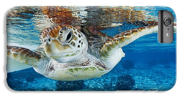 Turtle iPhone 7 Plus Case - Green Turtle by Alexis Rosenfeld