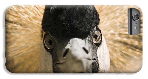 Grey Crowned Crane IPhone 7 Plus Case