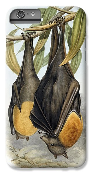 Grey Headed Flying Fox, Pteropus Poliocephalus IPhone 7 Plus Case by John Gould