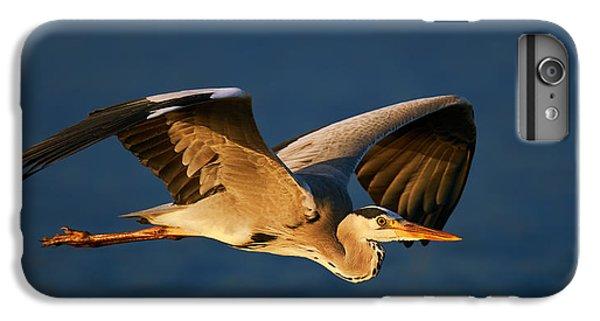 Heron iPhone 7 Plus Case - Grey Heron In Flight by Johan Swanepoel